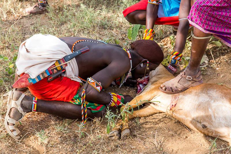 samburu-goat-blood-1