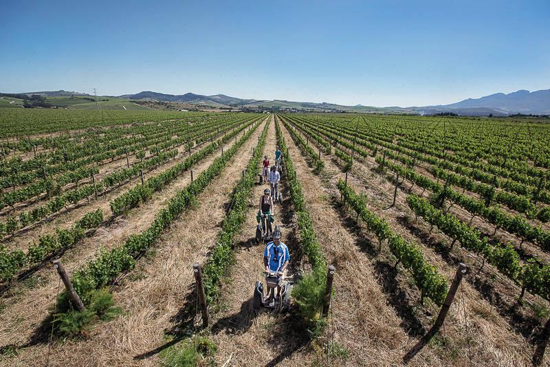 Photo courtesy of Spier Wine Farm